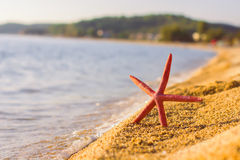 Summer Travel Destination Starfish on the Beach Royalty Free Stock Photography
