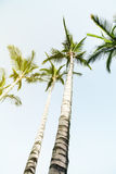 Summer Travel Vacation Concept. Beautiful Palms on Blue Sky Back Royalty Free Stock Photography