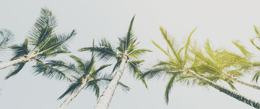 Summer Travel Vacation Concept. Beautiful Palms on Blue Sky Back Royalty Free Stock Image