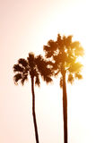 Summer Travel Vacation Concept. Beautiful Palms on Blue Sky Back Stock Photos