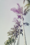 Summer Travel Vacation Concept. Beautiful Palms on Blue Sky Back Royalty Free Stock Photo