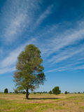 Summer Tree 1. Summer trees on a wispy cloud filled blue sky Stock Photo