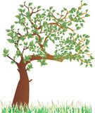 Summer tree. A vector illustration of a tree in the summer Stock Image