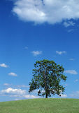 Summer Tree. In clouds landscape and meadow Stock Image