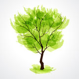Summer tree Royalty Free Stock Image