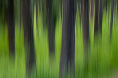 Summer Tree Abstract Royalty Free Stock Photography