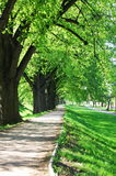 Summer tree alley Stock Images