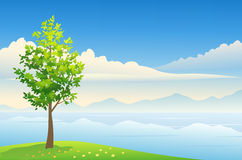 Summer tree background. Illustration of a beautiful summer background Royalty Free Stock Images