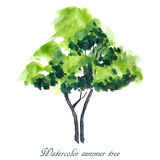 Summer tree. Summer background. Watercolor illustration Royalty Free Stock Photo