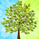 Summer tree blue and green Royalty Free Stock Images