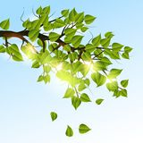 Summer tree branch Royalty Free Stock Image