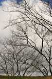 Summer Trees Stock Photo