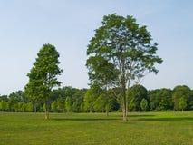 Summer Trees Stock Image