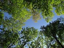 Summer trees Royalty Free Stock Photos