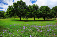 Summer trees landscape Stock Photography