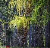 Summer trees and shining sun Royalty Free Stock Photo