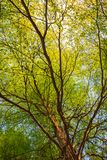 Summer treetop Royalty Free Stock Images