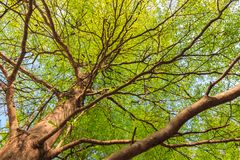 Summer treetop Stock Photography
