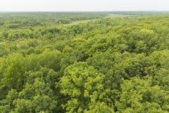 Summer Treetops Royalty Free Stock Photo