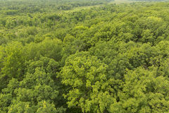 Summer Treetops Stock Photography