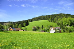 Summer in triburg, Germany. Summer time, green field in triburg Stock Photos