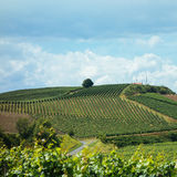 Summer trip by bike in the Kaiserstuhl vineyards in the Black Forest Stock Photography