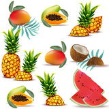 Summer tropic fruits papaya, pineapple, fresh coconut, watermelon, mango Collection set Vector. Illustrations Royalty Free Stock Photo
