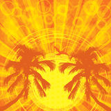 Summer tropical background. With palms Stock Photography