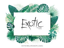 Summer tropical background with exotic palm leaves and plants. Banner template, Vector floral background. vector illustration
