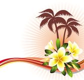Summer tropical background with frangipani (plumer Stock Image