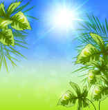 Summer tropical background Royalty Free Stock Photography