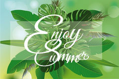 Summer tropical background with palm green leaves. Stock Photos