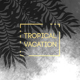 Summer tropical background of palm leaves and golden text and frame.  Vector illustration Stock Photo
