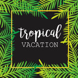 Summer tropical background of palm leaves. tropics, tropical, palm trees, tropical palm leaves. Royalty Free Stock Images