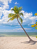 Summer at a tropical beach paradise in Florida. Key West USA, with palm trees, blue sky, clouds and crystal clear water of Atlantic Ocean Royalty Free Stock Images