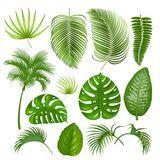 Tropical exotic leaves set. Summer tropical exotic leaves set. Vector illustration. Isolated on white background Royalty Free Stock Images