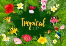 Summer tropical frame design Royalty Free Stock Image