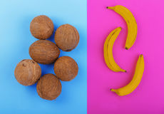Summer tropical fruits. Whole and organic coconuts on a blue background and bright yellow bananas on a bright pink background. Royalty Free Stock Image