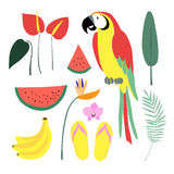 Summer tropical graphic elements. Parrot bird. Jungle floral illustrations, palm leaves, orchid, flower, watermelon,banana fruit Royalty Free Stock Images