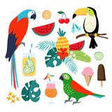 Summer tropical graphic elements. Toucan, parrot birds. Cocktails, fruit, icecream and jungle floral illustrations. Palm. Leaves, isolated illustrations, flat Stock Photography