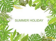 Summer tropical green background Stock Photos