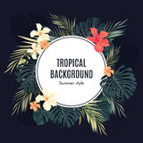 Summer tropical hawaiian background with palm tree Royalty Free Stock Photography