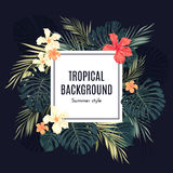 Summer tropical hawaiian background with palm tree Stock Photo