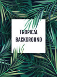 Summer tropical hawaiian background with palm tree leavs and exotic plants Stock Photos