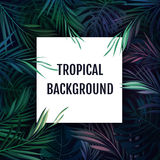 Summer tropical hawaiian background with palm tree leavs and exotic plants Stock Images