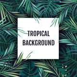 Summer tropical hawaiian background with palm tree leavs and exotic plants Stock Image