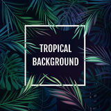 Summer tropical hawaiian background with palm tree leavs and exotic plants Royalty Free Stock Photos