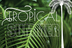 Summer tropical holiday green palm leaves background Stock Photography