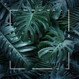 Summer tropical leaves on black background royalty free stock image