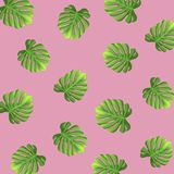 Summer tropical palm leaves background. Vector illustration EPS10. Summer tropical palm leaves background. Vector illustration EPS10 Royalty Free Stock Photography
